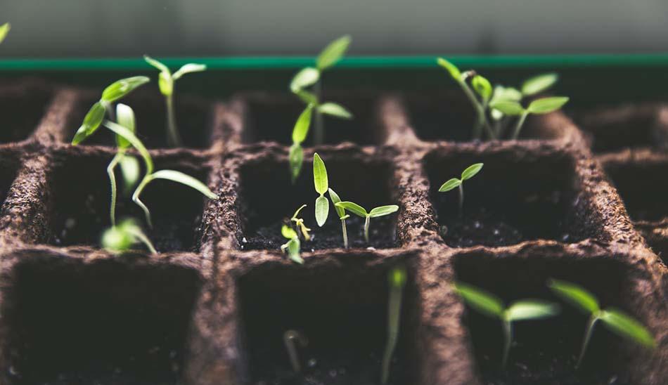 Seed VCs